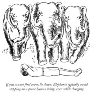 How to Survive an Elephant Stampede for Catastrophe blog post